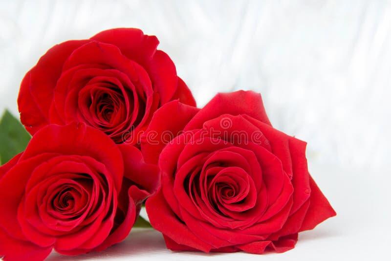 Τρία κόκκινα τριαντάφυλλα με το υπόβαθρο boke διάστημα αντιγράφων - βαλεντίνοι και μητέρα Women' 8 Μαρτίου έννοια ημέρας του  στοκ φωτογραφίες