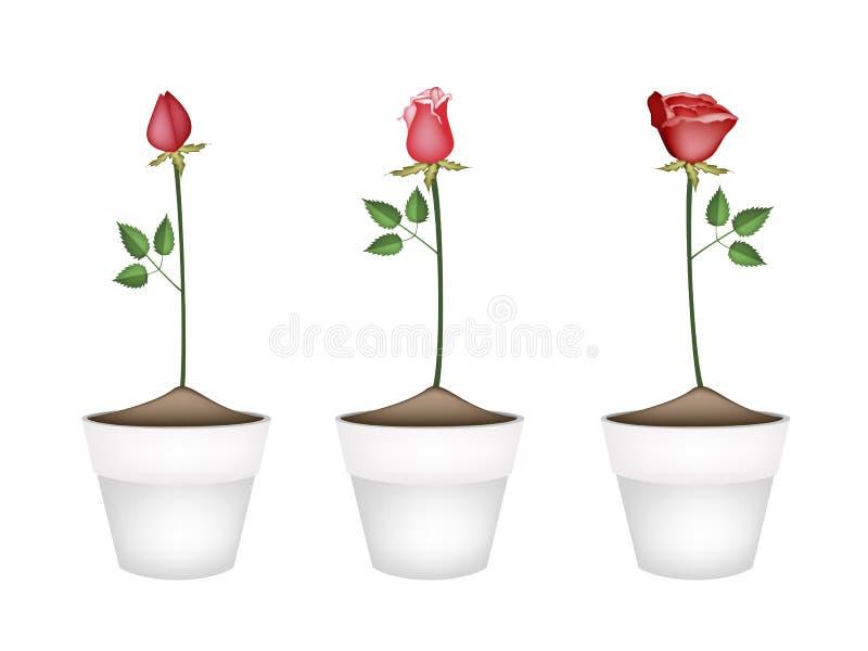 Τρία κόκκινα τριαντάφυλλα στα κεραμικά δοχεία λουλουδιών διανυσματική απεικόνιση