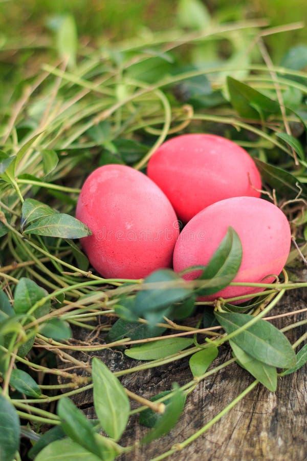 Τρία κόκκινα χρωματισμένα παραδοσιακά αυγά Πάσχας στην πραγματική φωλιά χλόης στοκ εικόνες