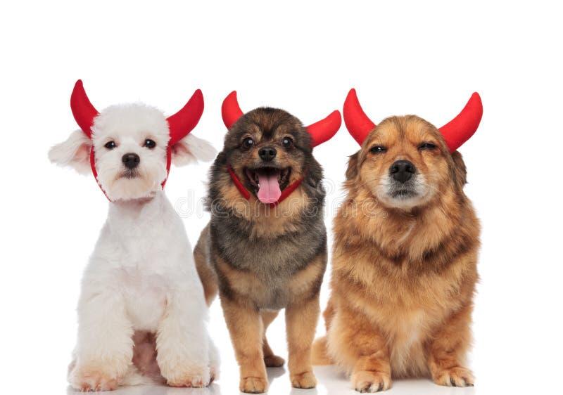 Τρία λατρευτά σκυλιά έντυσαν ως διάβολος για αποκριές στοκ εικόνες με δικαίωμα ελεύθερης χρήσης