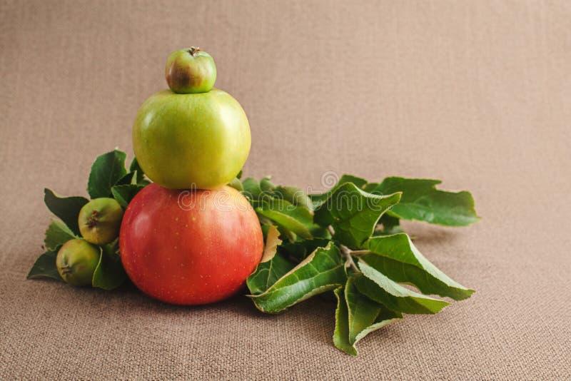τρία μήλα των ποικιλιών βαθμών ripeness το ένα στο άλλο στοκ φωτογραφία