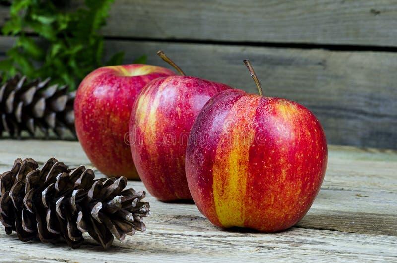 Τρία μήλα με τα pinecones στοκ εικόνες