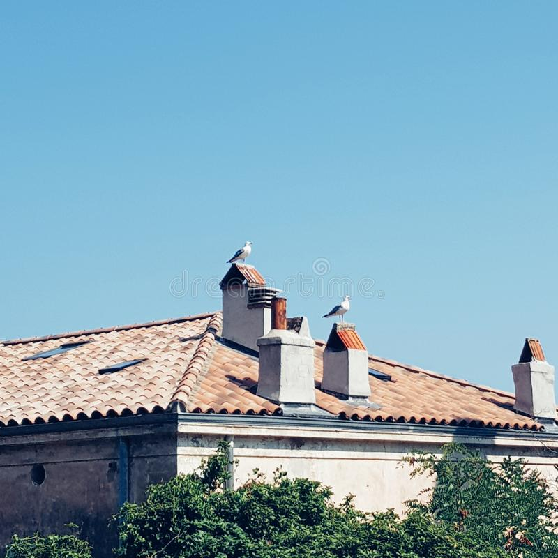 Τρία μικρά πουλιά στο νότο της Γαλλίας, Τουλόν στοκ εικόνα