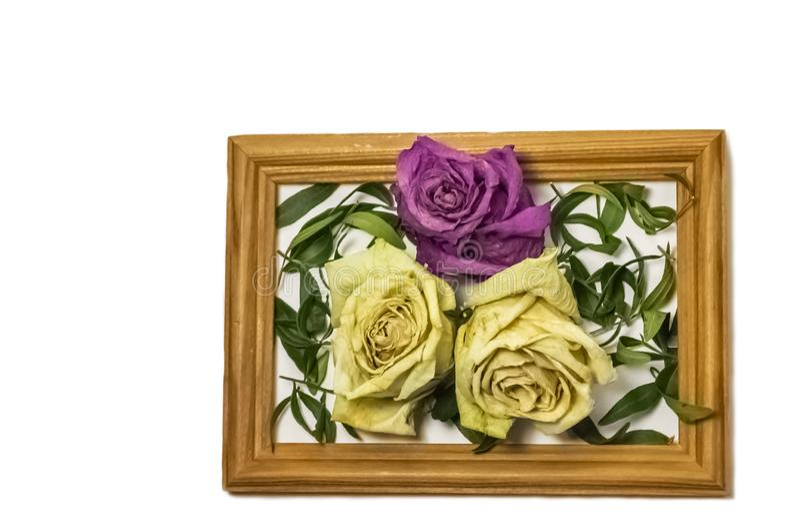 Τρία ξηρά τριαντάφυλλα με τα φύλλα, δύο άσπρα τριαντάφυλλα, ένα ρόδινο αυξήθηκαν, μέσα σε ένα ξύλινο πλαίσιο στοκ εικόνες