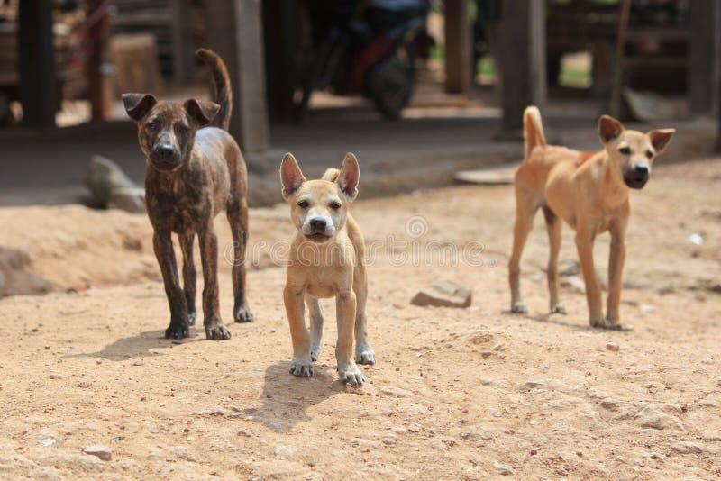 Τρία περιπλανώμενα σκυλιά φρουράς που προστατεύουν το έδαφος στοκ φωτογραφίες με δικαίωμα ελεύθερης χρήσης