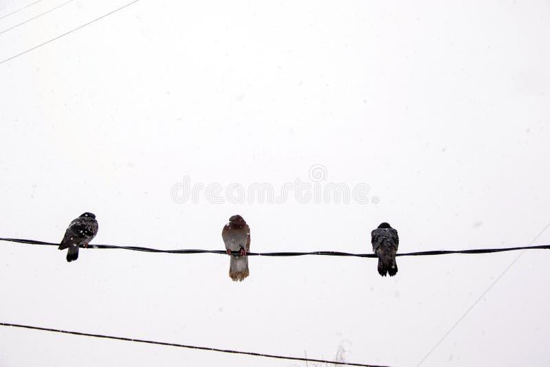 Τρία περιστέρια που κάθονται στα καλώδια στα πλαίσια του σκοτεινού χειμερινού ουρανού στοκ εικόνα με δικαίωμα ελεύθερης χρήσης