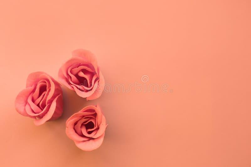 Τρία ρόδινα τριαντάφυλλα στο υπόβαθρο κοραλλιών με το διάστημα αντιγράφων στοκ εικόνες