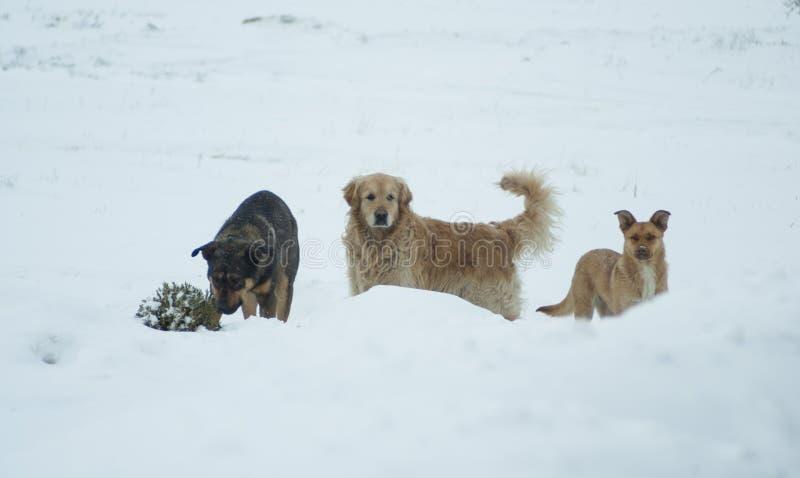 Τρία σκυλιά που στέκονται στο χιόνι πλησίον στοκ φωτογραφίες