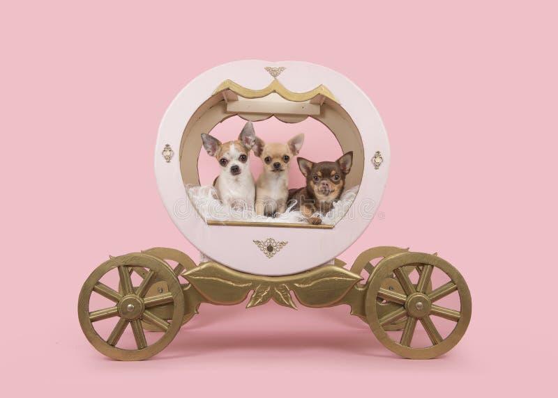Τρία σκυλιά chihuahua σε ένα ξύλινο λεωφορείο σε ένα ρόδινο υπόβαθρο στοκ εικόνες με δικαίωμα ελεύθερης χρήσης