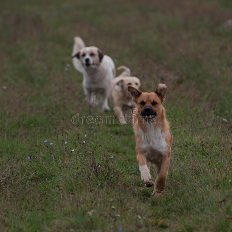 Τρία τρέχοντας εύθυμα σκυλιά στοκ φωτογραφία με δικαίωμα ελεύθερης χρήσης
