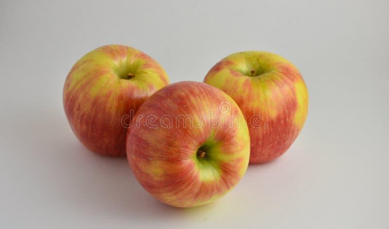 Τρία όμορφα κόκκινα και πράσινα τραγανά μήλα Gala στοκ φωτογραφίες με δικαίωμα ελεύθερης χρήσης