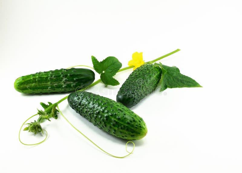 Τρία ώριμα νέα, πράσινα αγγούρια και ένα κλαδάκι με ένα λουλούδι στοκ φωτογραφία