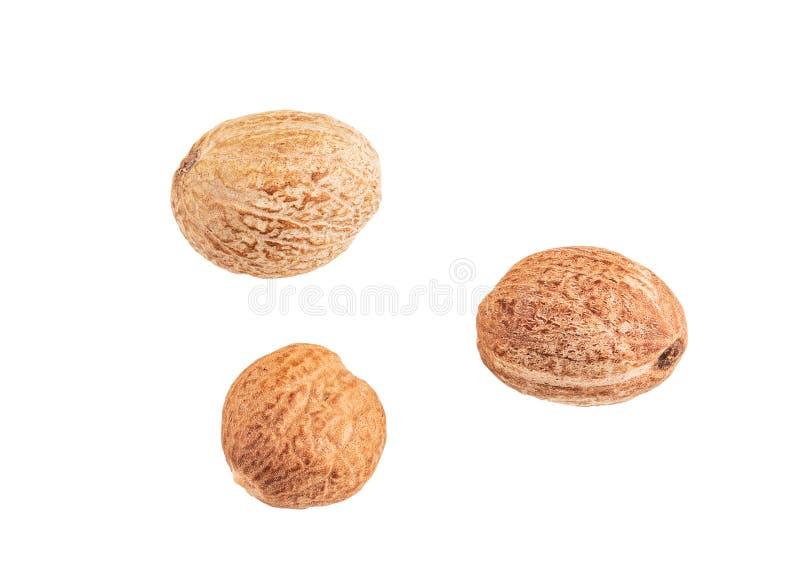 Τρία nutmegs που απομονώνονται στο λευκό στοκ φωτογραφίες
