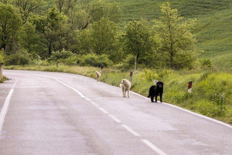 Τρία straydogs κατά μήκος του δρόμου στοκ φωτογραφίες με δικαίωμα ελεύθερης χρήσης
