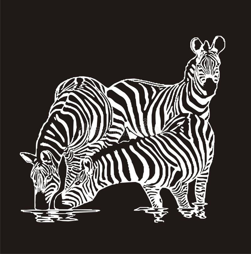 τρία zebras ελεύθερη απεικόνιση δικαιώματος