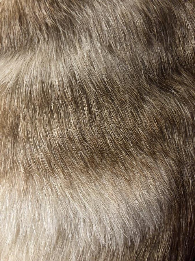 Τρίχα, γούνινη σύσταση στοκ εικόνα με δικαίωμα ελεύθερης χρήσης