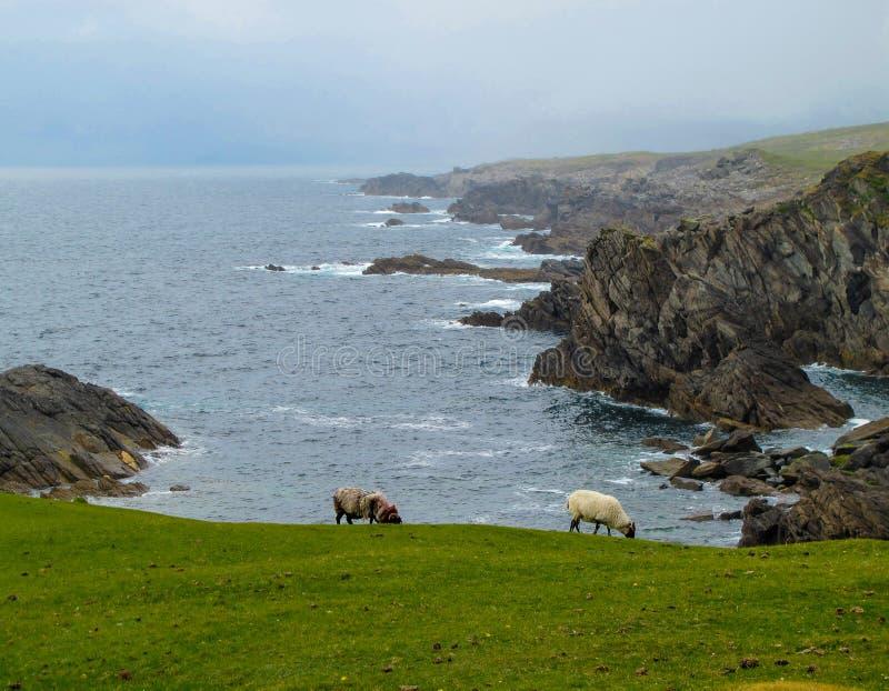 Τραχιά ατλαντική οδοντωτή ακτή Achill, Mayo, Ιρλανδία στοκ φωτογραφία
