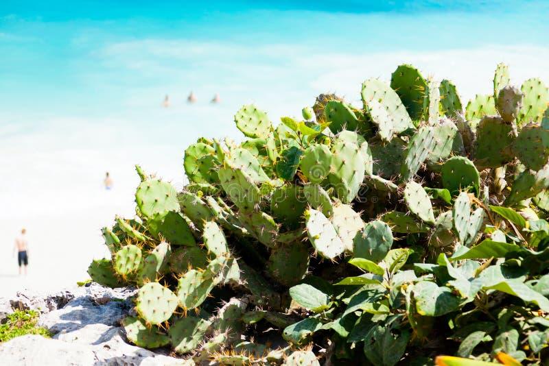 Τραχιά αχλάδια στην παραλία στοκ φωτογραφίες με δικαίωμα ελεύθερης χρήσης