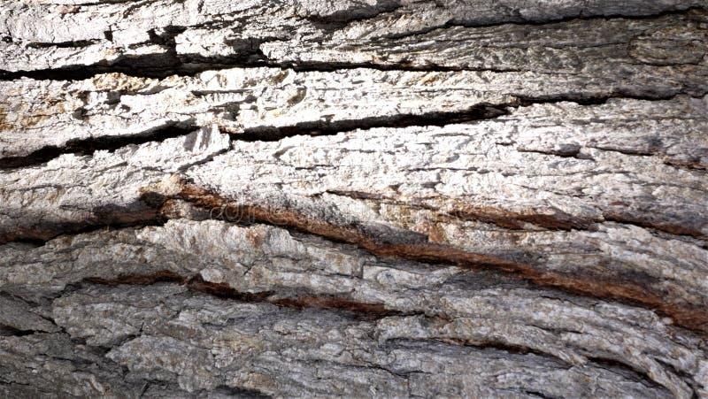 Τραχιές συστάσεις του φλοιού δέντρων στοκ εικόνες