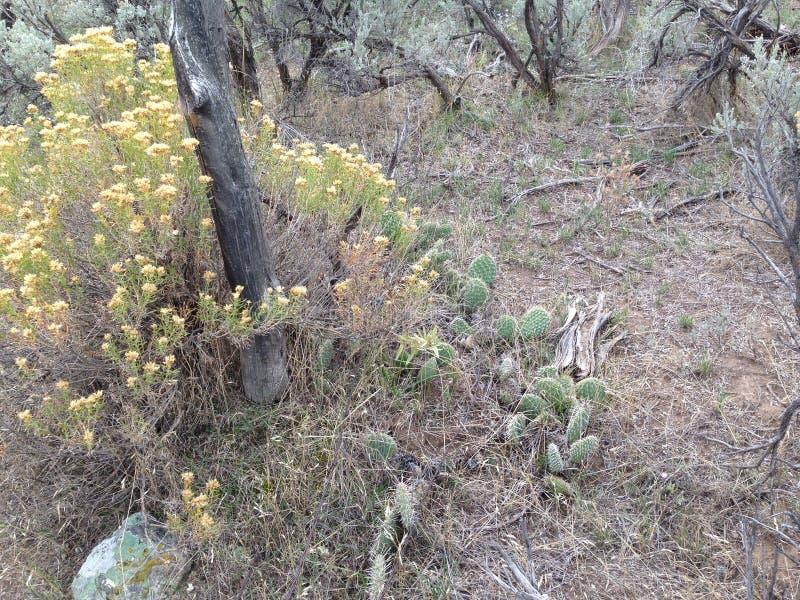 Τραχύς κάκτος στην έρημο με τη αρτεμισία στοκ εικόνες με δικαίωμα ελεύθερης χρήσης