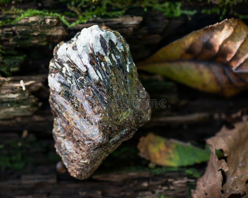 Τραχύ Astrophyllite στο δείγμα μητρών από τη Ρωσία σε έναν φλοιό δέντρων στο δάσος άλλα ονόματα: Aastrophyllite, Asterophyll στοκ φωτογραφία