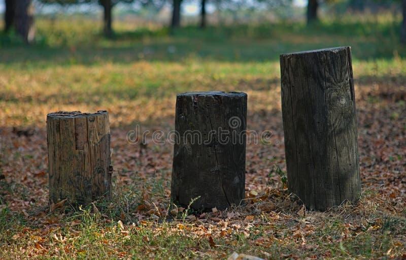 Τρεις διαφορετικοί κορμοί δέντρων μεγέθους σε ένα πάρκο φθινοπώρου στοκ εικόνες με δικαίωμα ελεύθερης χρήσης