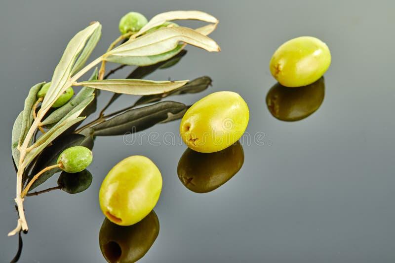 Τρεις ελιές με τον κλάδο ελιών με τα φρούτα που βρίσκονται σε ένα γκρίζο υπόβαθρο στοκ εικόνα