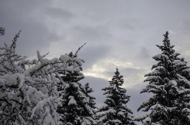 Τρεις ερυθρελάτες στο χειμερινό ουρανό στοκ εικόνα με δικαίωμα ελεύθερης χρήσης