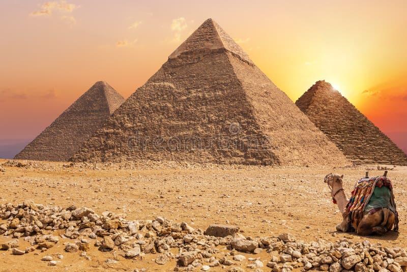 Τρεις κύριες πυραμίδες Giza και μιας καμήλας στο ηλιοβασίλεμα, Αίγυπτος στοκ εικόνα
