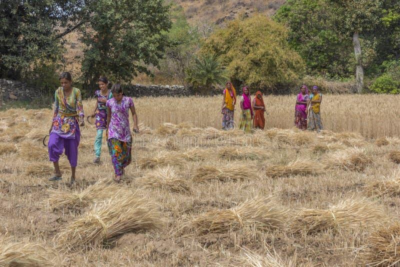Τρεις λαμπρά ντυμένοι νέοι θηλυκοί κόπτες σίτου κοντά σε Udaipur στο Rajasthan στοκ φωτογραφίες