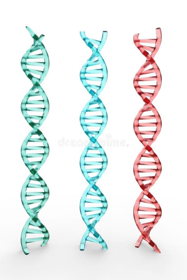 Τρεις δομές DNA στο άσπρο υπόβαθρο στοκ εικόνες