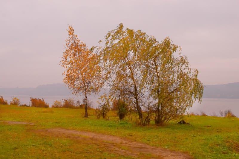 Τρεις χρυσές σημύδες φθινοπώρου στον αέρα στοκ εικόνα