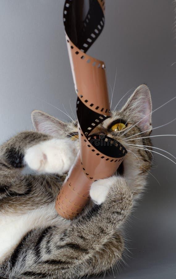 Τρελλή λουρίδα γατακιών και ταινιών στοκ φωτογραφία