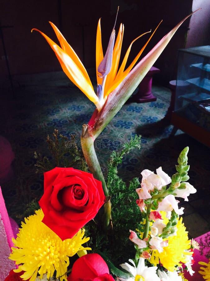 τρελλό λουλούδι στοκ εικόνα