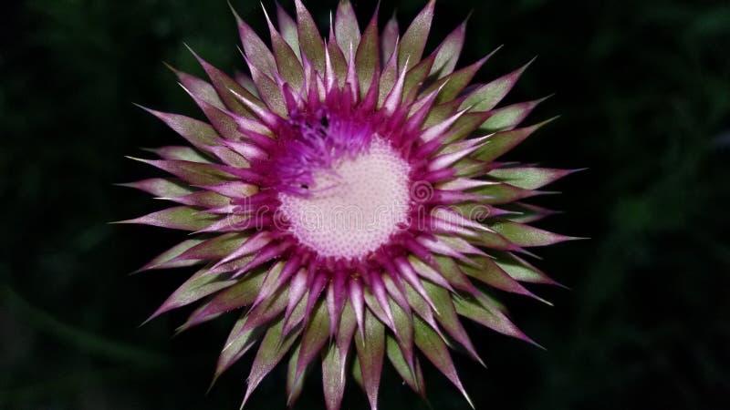 τρελλό λουλούδι στοκ φωτογραφίες με δικαίωμα ελεύθερης χρήσης