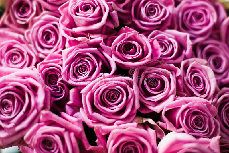 τριαντάφυλλα ανθοδεσμών στοκ εικόνα