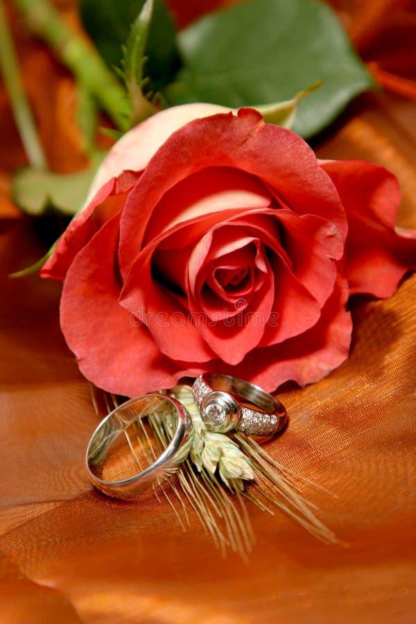 τριαντάφυλλα δαχτυλιδ&iota στοκ εικόνα με δικαίωμα ελεύθερης χρήσης