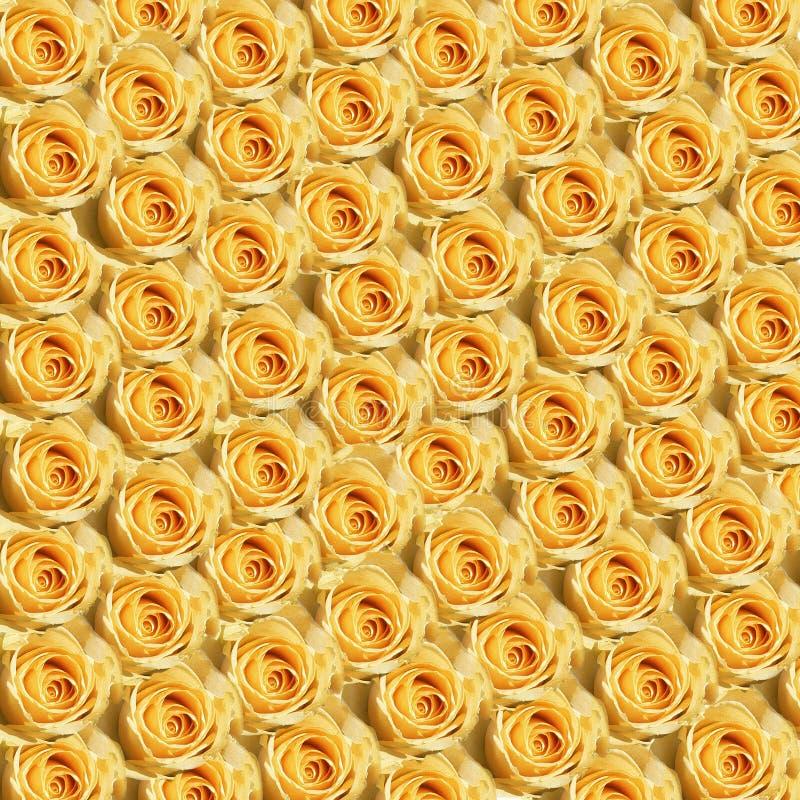 Download τριαντάφυλλα κίτρινα στοκ εικόνα. εικόνα από κίτρινος, πρότυπο - 107483