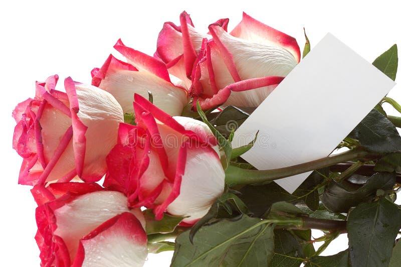 τριαντάφυλλα καρτών ανθο&d στοκ εικόνα