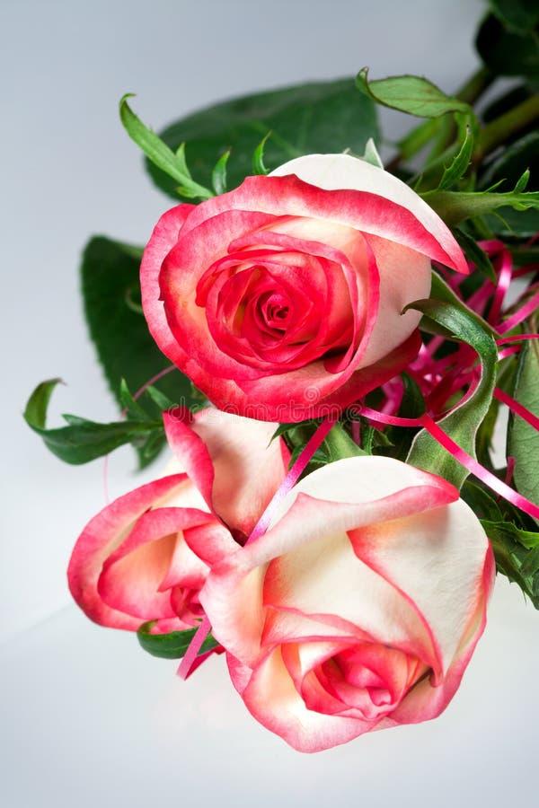Τριαντάφυλλα λουλουδιών στοκ φωτογραφία με δικαίωμα ελεύθερης χρήσης