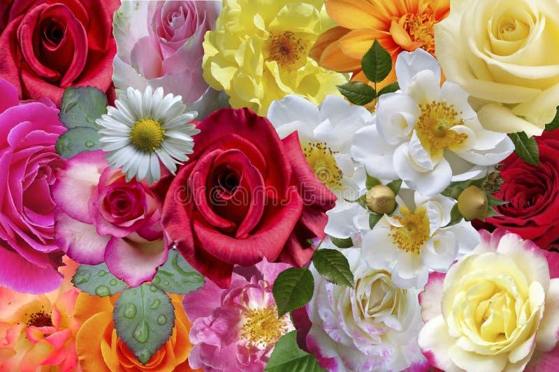 Τριαντάφυλλα & λουλούδια στοκ φωτογραφία