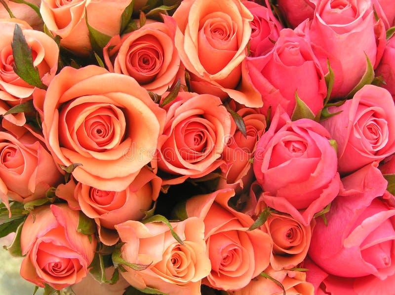 τριαντάφυλλα σπορείων στοκ εικόνες