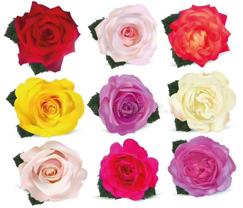 Τριαντάφυλλα συλλογής στο άσπρο υπόβαθρο Το εικονίδιο αυξήθηκε Τριαντάφυλλα κόκκινα, μπεζ, πορφυρός, ρόδινος, άσπρος, κοράλλι, κί ελεύθερη απεικόνιση δικαιώματος