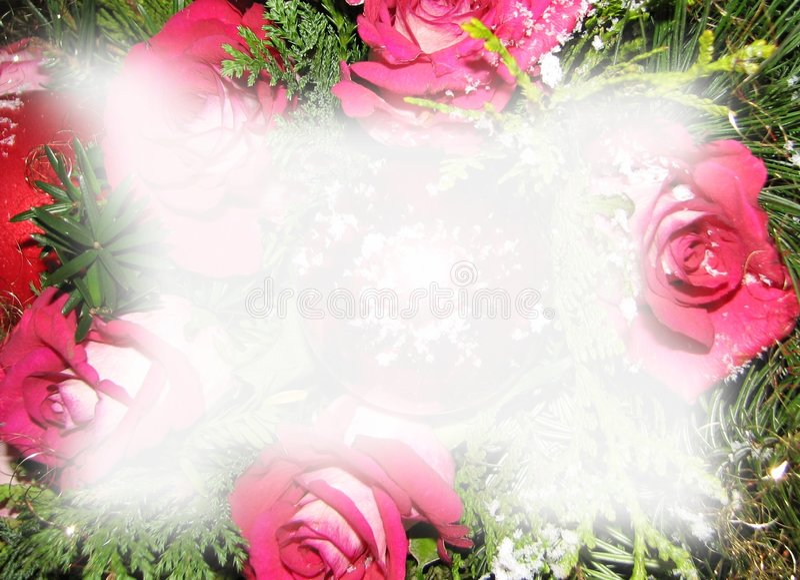 Download τριαντάφυλλα Χριστουγέν& απεικόνιση αποθεμάτων. εικονογραφία από τριαντάφυλλα - 398040