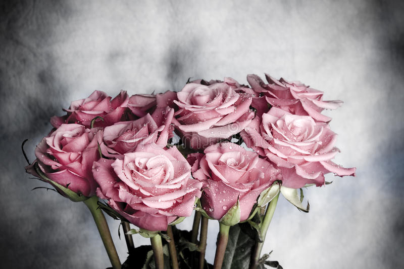 τριαντάφυλλα στοκ φωτογραφίες