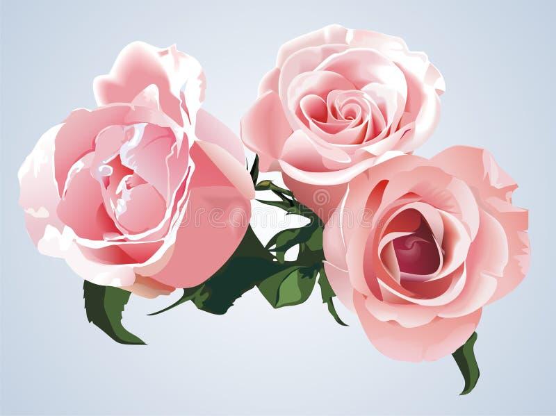 τριαντάφυλλα διανυσματική απεικόνιση