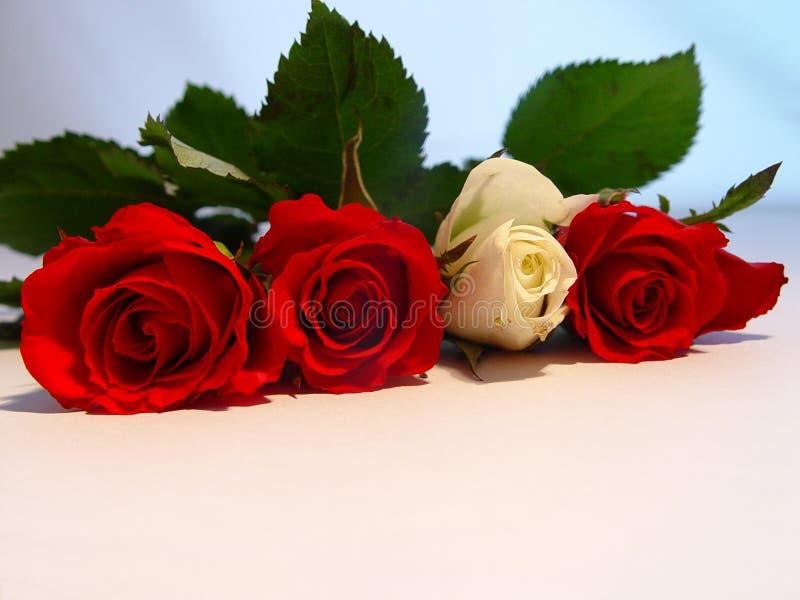 Download τριαντάφυλλα στοκ εικόνες. εικόνα από άσπρος, λουλούδια - 55600