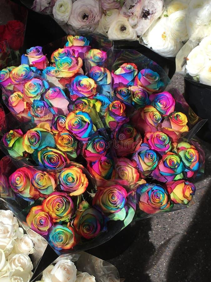 Τριαντάφυλλα ουράνιων τόξων στοκ φωτογραφία