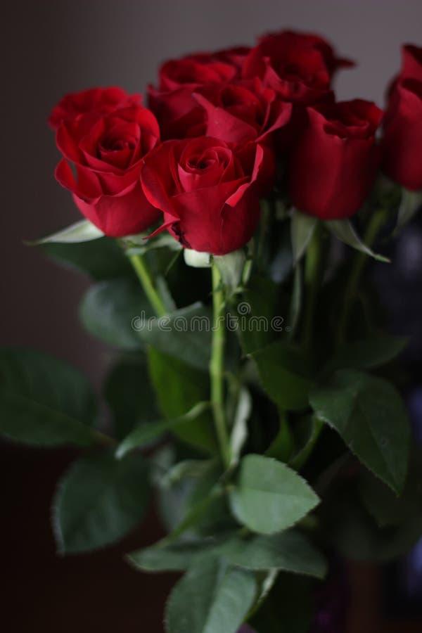 Τριαντάφυλλα 8 στοκ φωτογραφία