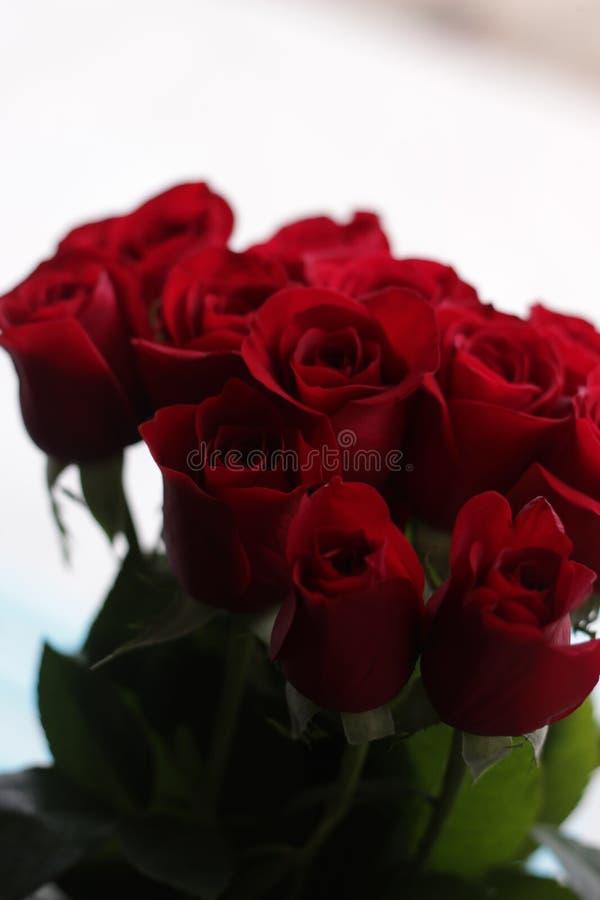 τριαντάφυλλα 1 στοκ εικόνες με δικαίωμα ελεύθερης χρήσης